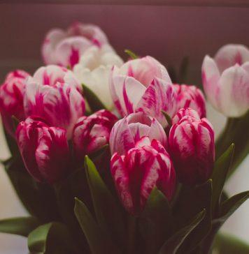 Schnittblumen frisch halten