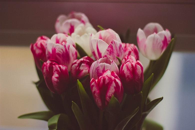 Zuhause Im Blumenmeer Schnittblumen Frisch Halten