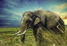 Elefantastisch: 7 interessante Fakten über Elefanten