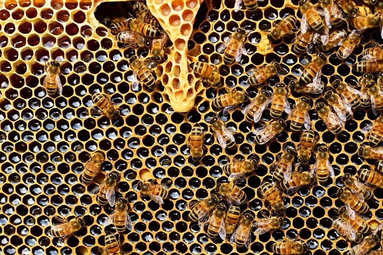 Warum ist Honig eigentlich nicht vegan? Das fragen sich viele Verbraucher ...