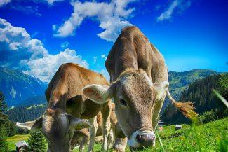 Vorurteile im Vegan-Check