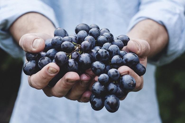 Weintrauben sind oftmals stark mit Pestiziden belastet und sollten in Bio-Qualität gekauft werden.