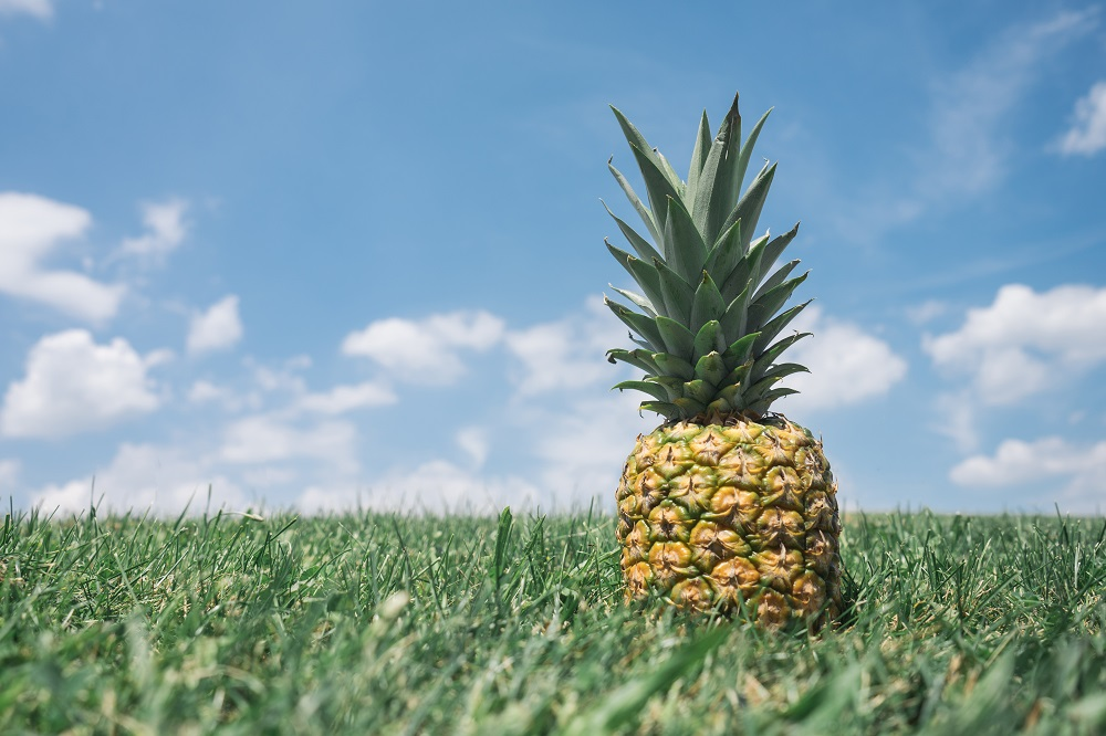 pineapple-supply-co-27851