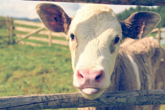 7 Gründe, vegan zu leben