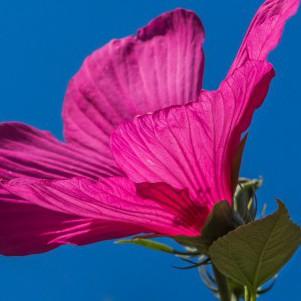 Schlaue Pflanzen: Können Blumen denken?
